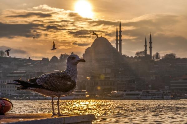 Курорты Турции посетило 11.8 млн туристов